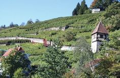 Vineyard above the Neckar River, Esslingen, Germany