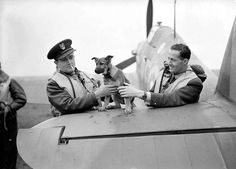 Pilots from the No. 303 Polish Fighter Squadron with the Squadron's mascot, a puppy dog. Leconfield, 1940.