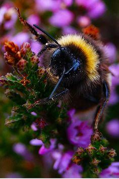 Bee by Darren Welsh on 500px