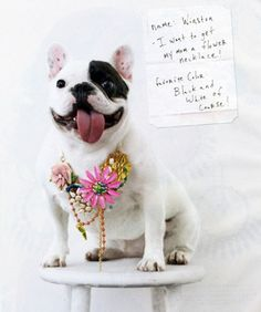 vinage brooches, French bulldog