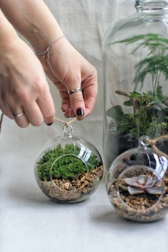 Terrarium workshops in London. Learn how to make your own unique eco-system while hearing all about the fascinating history of terrariums. Terrarium Workshop, Diy Terrarium Kit, Make Your Own, Make It Yourself, How To Make, Eco System, Fern, London, History