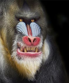 Mandrill - I don't think he wants to be my friend...