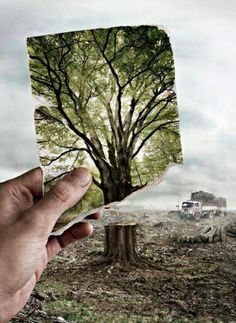 The use of paper is one of the major factors contributing to climate change #climate #paper #recycle