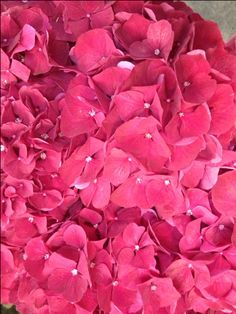 Sold in bunches of 10 stems from the Flowermonger the wholesale floral home delivery service. Red Wedding Flowers, Red Flowers, Ruby Red, Stems, Hydrangea, Diy Wedding, Delivery, Rose, Floral
