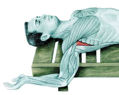 Estiramientos: Guia básica ilustrada de estiramientos. – Gimnasio Rizo Human Anatomy Drawing, Golf Exercises, Butt Workout, Health Fitness, Drawings, Pictures, Mudras, Feng Shui, Reiki