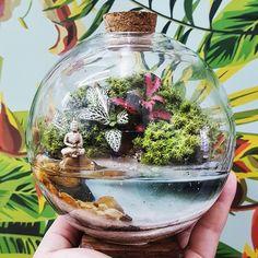 Terrariums with water , Mini Terrarium, Terrarium Scene, Fairy Terrarium, Hanging Terrarium, Glass Terrarium, Succulent Terrarium, Succulent Gardening, Garden Planters, Orchid Terrarium