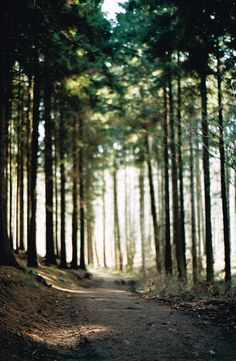 Into the Forest by Luziferian, via Flickr