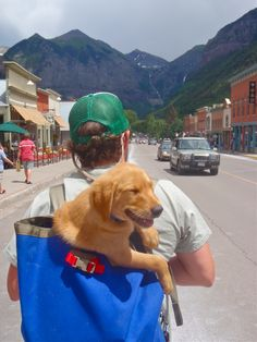 Golden Retriever puppy being carried in a Townie Pack (Jagged Edge) in Telluride, CO