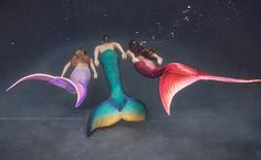Be Inspired to Live Your Fantasea with Swimmable Mermaid Tails. Be a mermaid, merman, or other beautiful creature of the sea! Custom made silicone mermaid and fabric mermaid tails. Mermaid Images, Mermaid Pictures, Mermaid Cove, Mermaid Fairy, Merman Tails, Realistic Mermaid Tails, Professional Mermaid, Mermaid Artwork, Mermaid Paintings