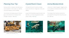 Some key information to help you plan your trip to the Crystal River, thoughts on what the future holds for this unique experience and finally a link to download my extensive article on the Manatees of the Crystal River that was published in the wildlife magazine Anima Mundi