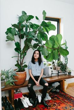 Fiddle leaf fig or Ficus Lyrata - Urban Jungle: which plants, why and how to take care of Interior Plants, Interior And Exterior, Interior Design, Design Interiors, Plantas Indoor, Plant Decor, Houseplants, Planting Flowers, House Ideas