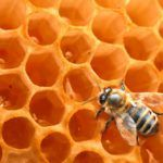 Honey for Growing Long, Natural Hair (Curly Nikki) Long Natural Hair, Natural Hair Styles, Home Remedies, Natural Remedies, Curly Nikki, Curly Girl, Genetically Modified Food, Raw Honey, Honey Bees