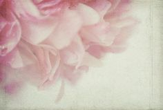 Ethereal  Peony  Photograph, Shabby Chic Wall Decor, Floral Art Print of  Pink Peony Petals, Still Life