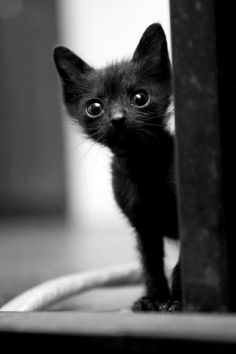 Never hesitate to adopt a black cat! They are the least adopted color of cats due to a stupid superstition. I love dark, grey or black cats, they are so elegant More More