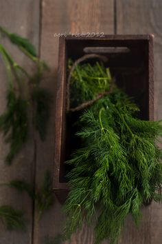 dill leaves | Flickr - Photo Sharing!