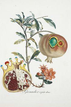 Frutas en acuarela (1969):   9 Obras de Salvador Dalí que casi nadie conoce