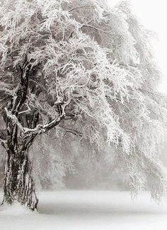 Find images and videos about white, winter and snow on We Heart It - the app to get lost in what you love. Winter Szenen, Winter Magic, Winter Trees, Winter Christmas, Snowy Trees, Winter White, Snow White, Foto Picture, I Love Snow