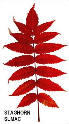 56 Best Plant Identification images   Plant identification