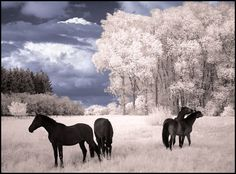 Infrared Photography | Hi-Def Pics - 12 Beautiful Photos of Infrared Trees - My Modern ...