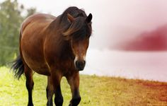 The last of summer Horse Pictures, Horses, Summer, Animals, Animales, Pictures Of Horses, Summer Time, Animaux, Horse