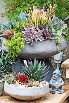 Centro Garden Succulent Bowls Succulent Bowls, Succulent Planter Diy, Succulent Centerpieces, Hanging Succulents, Succulents In Containers, Cacti And Succulents, Succulent Gardening, Succulent Care, Plastic Containers