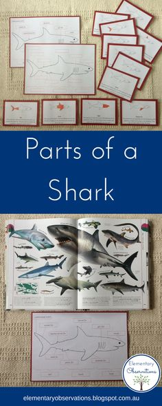 Parts of a Shark - charts & definition cards