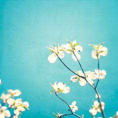 Large Photography  aqua blue decor flowers by CarolynCochrane, $115.00