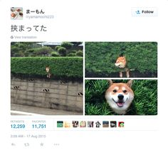 Happy #NationalDogDay! Hope your pup is as happy as this super chill Japanese Shiba inu stuck in a bush.