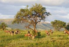 Magalies Wild Game Farm is situated in the Magaliesburg Nature Reserve/Biosphere, where bird life is abundant. Game on the farm includes kudu, Wild Forest, Nature Reserve, Holiday Destinations, Conservation, South Africa, Things To Do, National Parks, Walking, Games
