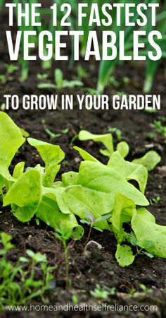 The 12 Fastest Vegetables to Grow in your Garden!