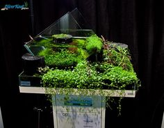 "Nano Competition tank ""Knott Style"" - A nano tank with a splash of fountain into a wabi-kusa style tray!"