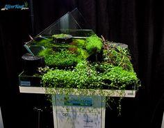 "Nano Competition tank ""Knott Style"" - A nano tank with a splash of fountain into a wabi-kusa style tray!"