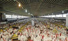 OCP a dévoilé son nouveau produit alimentaire « PPP Animal Feed »
