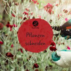 die besten 25 rhododendron pflege ideen auf pinterest hortensie hortensien garten und hortensien. Black Bedroom Furniture Sets. Home Design Ideas