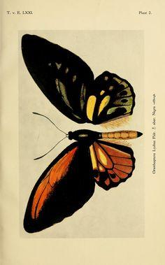 Bijzondere vlinders uit Nederlandsch-Indië - BioStor