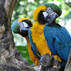 Parque das Aves - Macaws at Bird Park