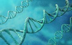 Gene injection to brain could halt Alzheimer's disease - Telegraph.co.uk