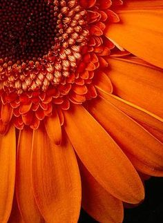 ~ஜ~Gerbera Flowers~ஜ~