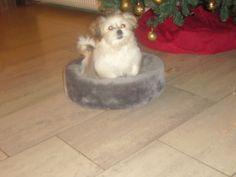 mijn hondje