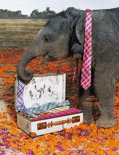 Hermes Ad Campaigns Through the Ages - Page 8 - PurseForum. Hermes Orange, Great Ads, Elephant Love, Hermes Paris, Ad Art, Commercial Photography, Advertising Campaign, Fashion Branding, Fashion Company