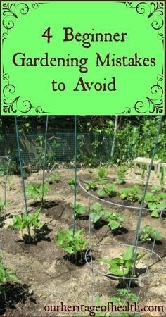 If you're a beginning gardener, avoiding these four common mistakes can help you to have a better, more productive garden | http://ourheritageofhealth.com