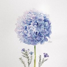 watercolors Korean Artist Uploads Step By Step Tutorials On How To Draw Beautiful Flowers Botanical Drawings, Botanical Art, Botanical Illustration, Watercolor Illustration, Flower Drawing Tutorials, Art Tutorials, Art Floral, Watercolor Drawing, Watercolor Paintings