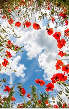 Poppies and sky. Spring Flowers, Wild Flowers, Pictures Of Poppy Flowers, Flower Aesthetic, Jolie Photo, Flower Wallpaper, Nature Pictures, Amazing Nature, Beautiful Landscapes