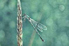 #macro #insect #dragonfly #summer #nature #sony