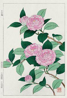 Antique prints from Shodo Kawarazaki Spring Flower Woodblock Prints Botanical Drawings, Botanical Illustration, Botanical Prints, Illustration Art, Chinese Painting, Chinese Art, Japanese Prints, Japanese Art, Illustration Botanique