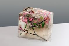 View top-quality stock photos of Frozen Pink Cherry Blossom. Find premium, high-resolution stock photography at Getty Images. Vanitas, Ice Blocks, Water Flowers, Pink Flowers, Gray Background, Life Photography, Cherry Blossom, Flower Arrangements, Floral Arrangement