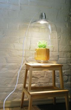 """This lamp is a subtle mix of transparency, elegance, and clever design. Milo is a creation by Lightovo, an interior and product design company from Poland. The gorgeous glass shade can contain a small or medium-sized lamp to connect you with nature and further decorate your home.  With Milo, you can have a tiny """"greenhouse"""" in your interior and liven up the whole place. The lamp works with LED lights that are the closest to natural light and will not overheat the plants."""