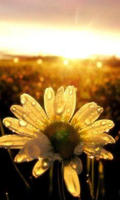 Sunshine  Amo girassóis!!  Seja sempre feliz!!!