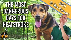 Heatstroke kills dogs, pure and simple. This is common knowledge, but did you know that it's not always the hottest days of the year that are the most dangerous? Days Of The Year, Hot Days, Pet Health, Dog Care, Just Go, Did You Know, Pet Dogs, Knowledge