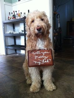 9 Adorable Ways to Include Your Dog in Your Wedding: HOW CUTE IS THIS?!?!